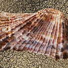 Seashell on Glass by -aimslo-