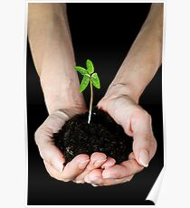Woman's hands holding seedling Poster