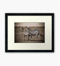 Suckling Zebra Framed Print