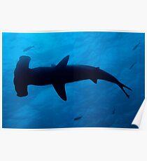 Scalloped Hammerhead shark (Sphyrna lewini), underwater view Poster
