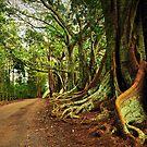 New Farm Road - Norfolk Island by Greg Earl