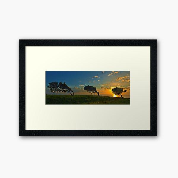 Windswept Trees - Norfolk Island Framed Art Print
