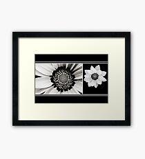 Black and White Gazania Diptych Framed Print