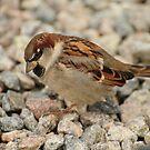 Little dicky bird by James1980
