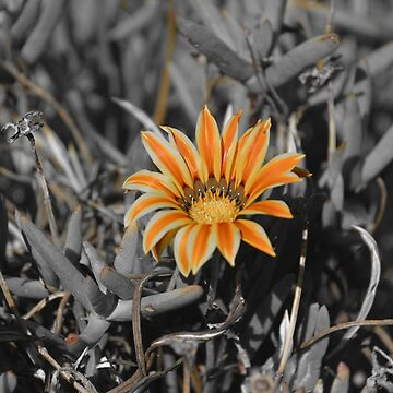 A touch of orange by SusanHope