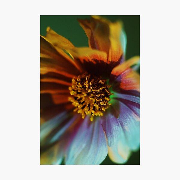 Cosmic Cosmos  Photographic Print