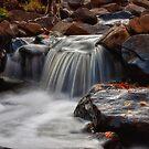 Kingsbury Creek I by Angela King-Jones