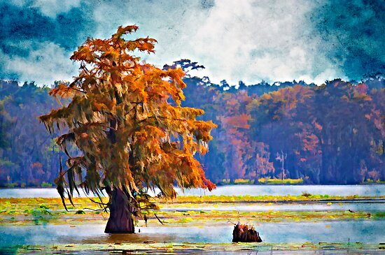 Autumn at Cypress Island by Bonnie T.  Barry