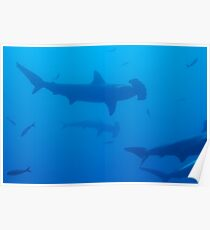 Silhouette of Scalloped Hammerhead sharks (Sphyrna lewini) underwater view Poster