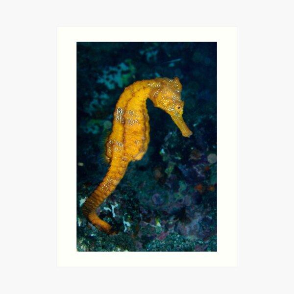 Sea horse (Hippocampus) underwater view Art Print