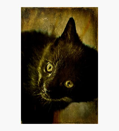 Maui the Cat Photographic Print