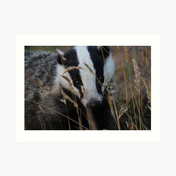 Badger hide and seek Art Print