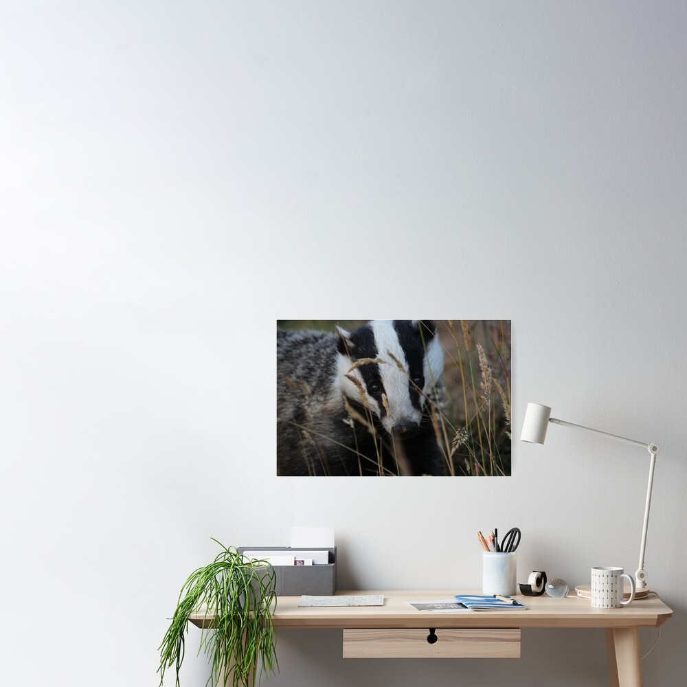 Badger hide and seek Poster