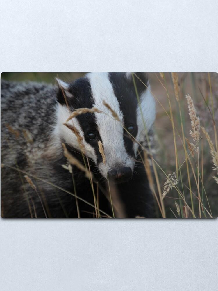 Alternate view of Badger hide and seek Metal Print