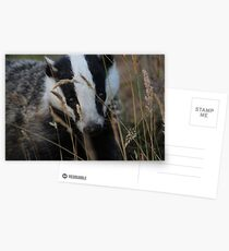 Badger hide and seek Postcards