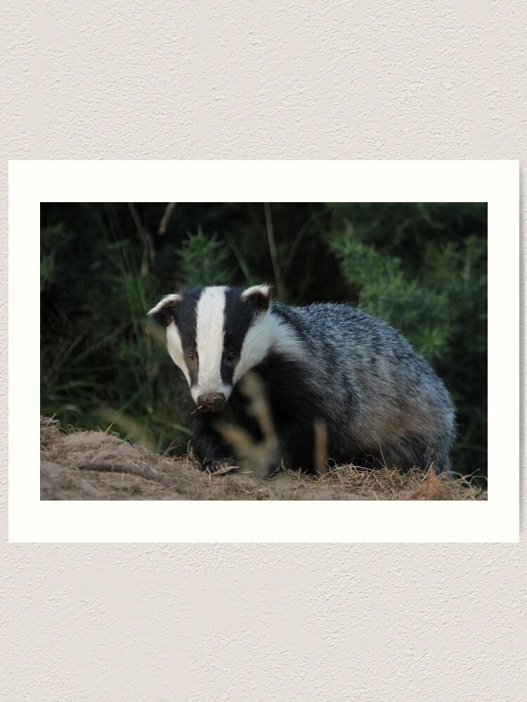 Alternate view of Badger Art Print