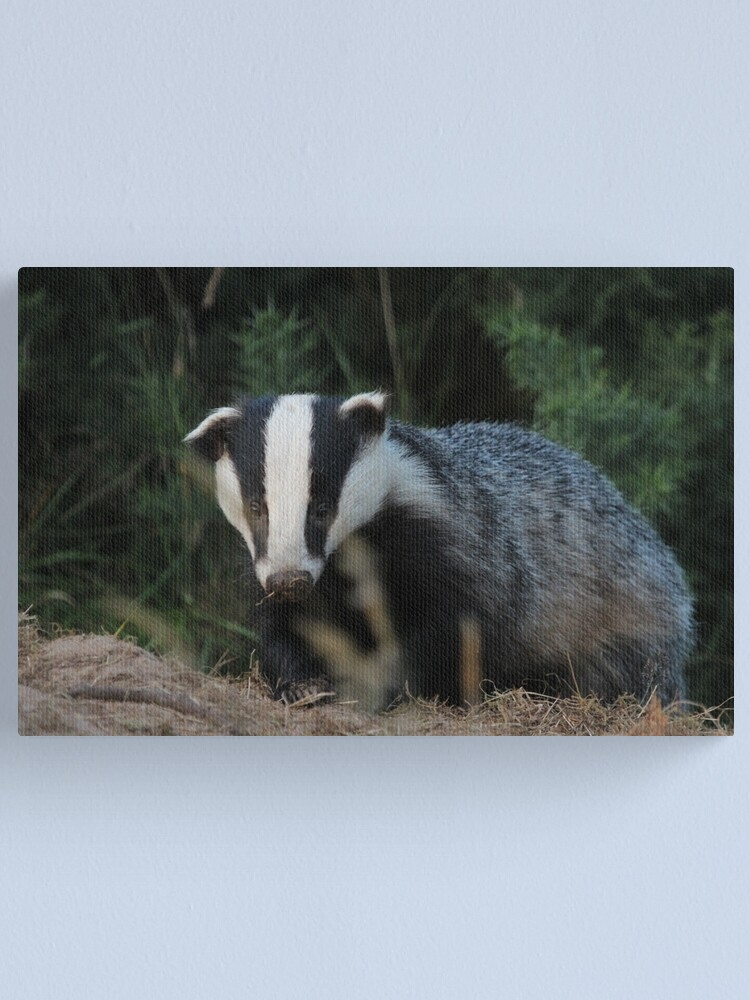 Alternate view of Badger Canvas Print