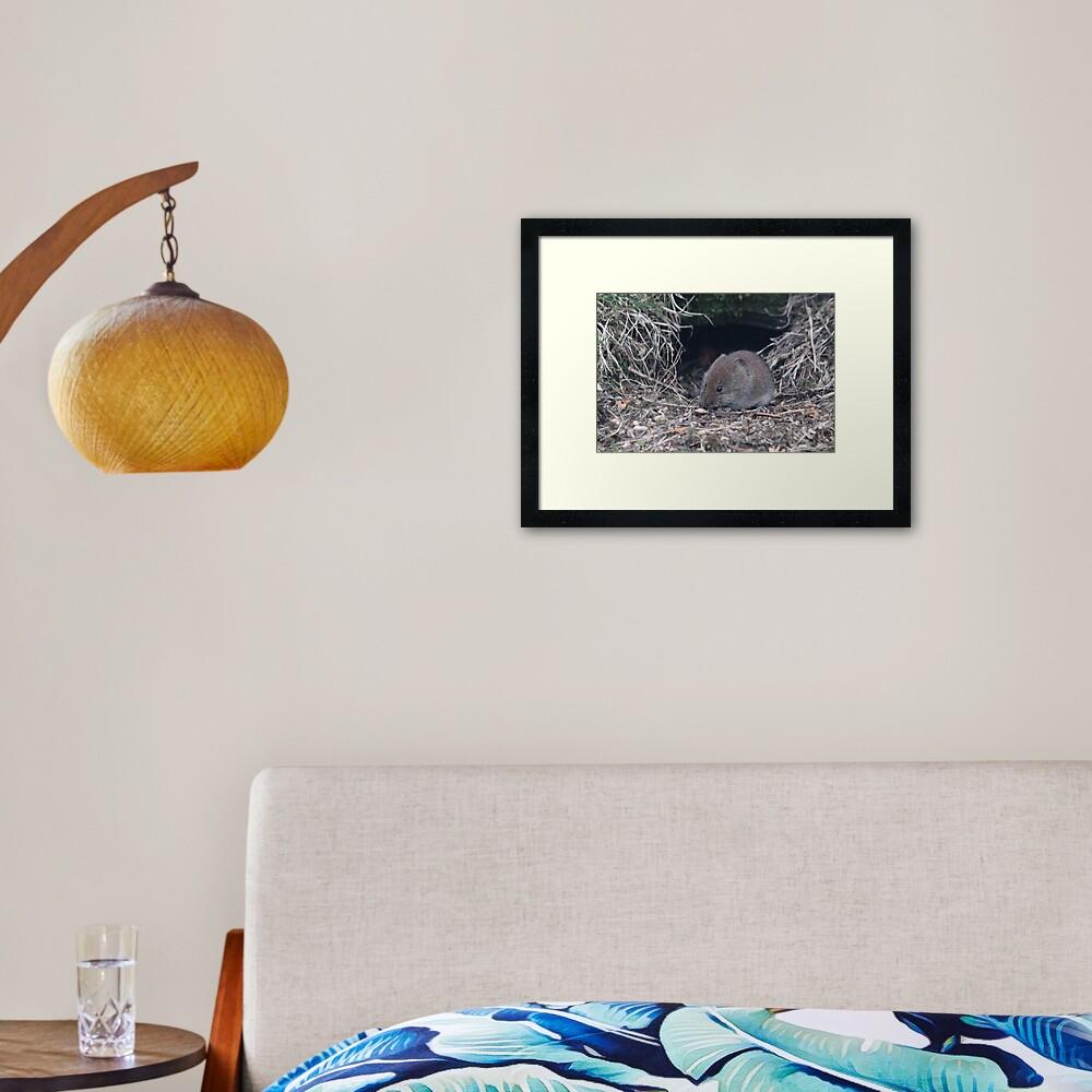 Bank vole Framed Art Print