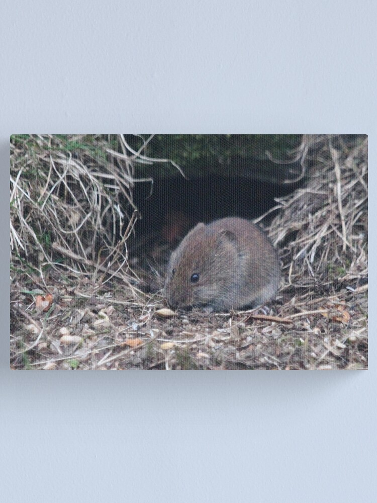 Alternate view of Bank vole Canvas Print