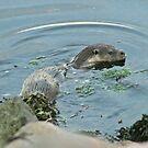 Otter by Fiona MacNab