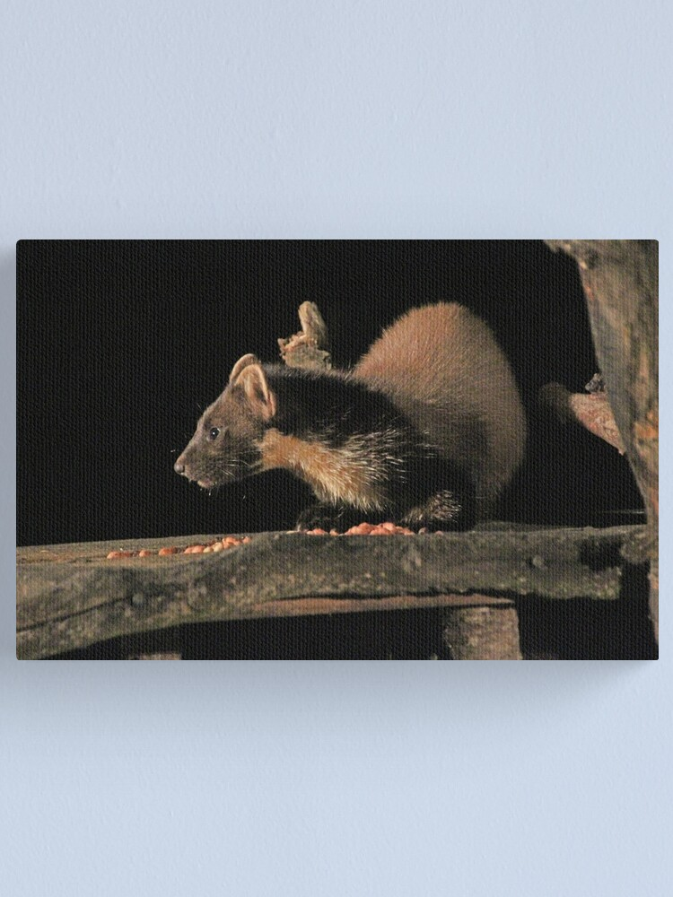 Alternate view of Pine marten Canvas Print