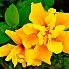 Macro Flower, Yellow  by Jessica Chirino Karran