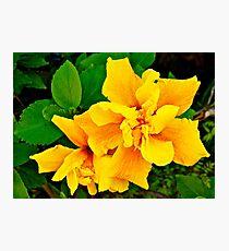 Macro Flower, Yellow  Photographic Print