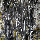 wood ...... silver birch#12 by banrai