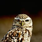 iphone case Burrowing Owl by David Carton