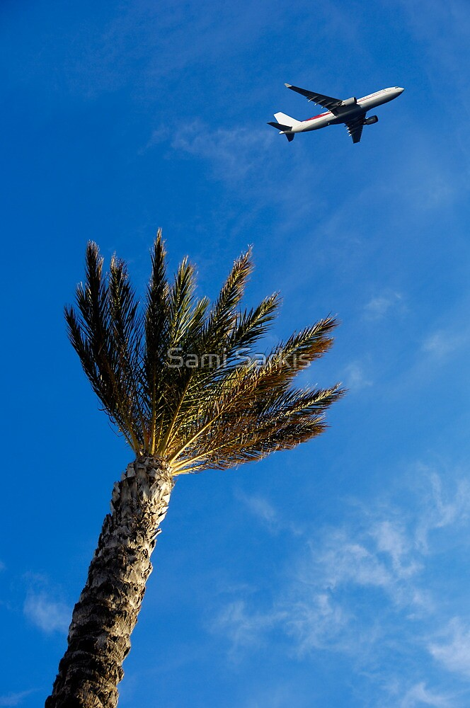 Palm tree with aeroplane flying in background, low angle view by Sami Sarkis