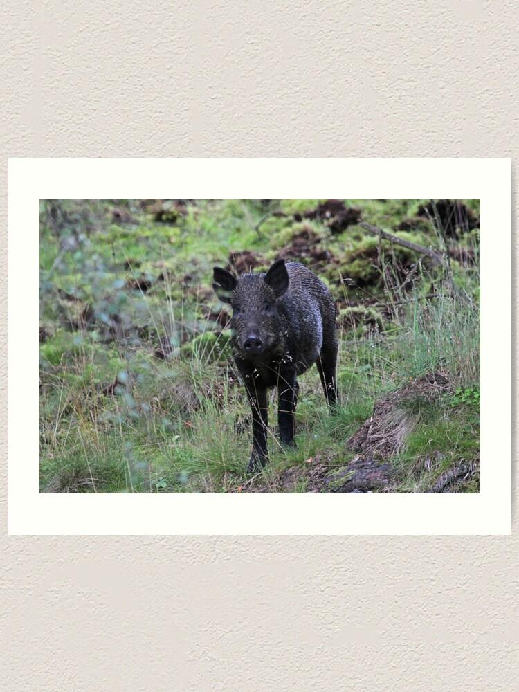 Alternate view of Wild boar Art Print
