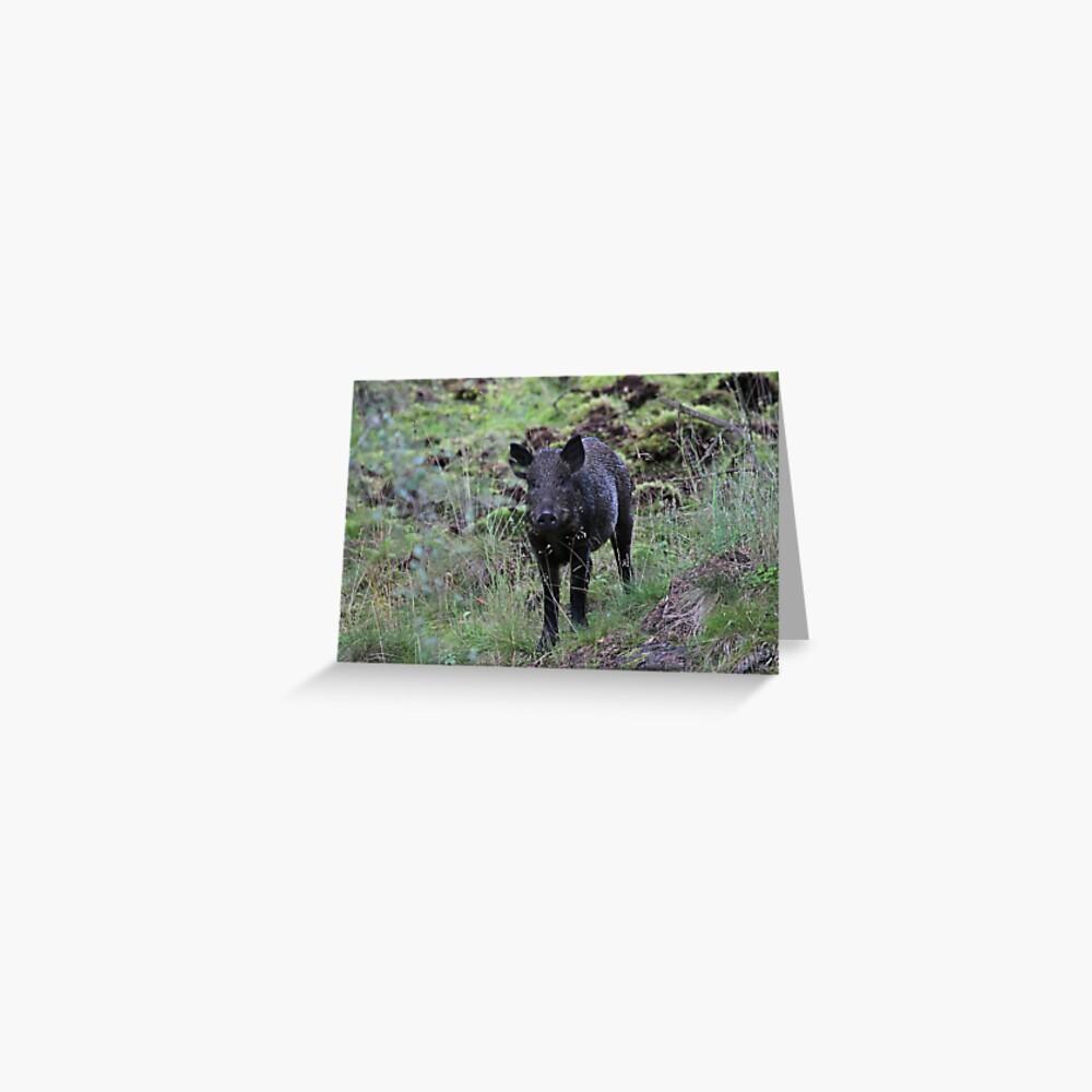 Wild boar Greeting Card