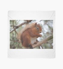 Red squirrel Scarf