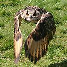 Flap Your Wings by John Dalkin