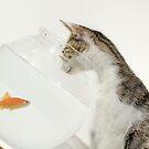 Cat looking at fish in fishbowl by Sami Sarkis