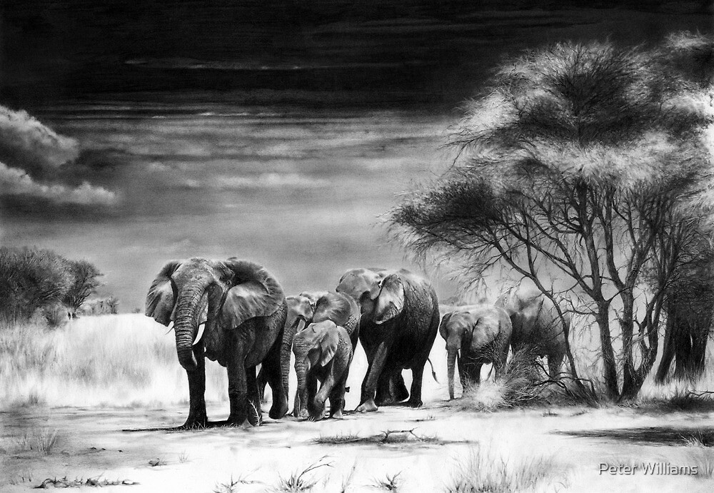 Heart Of Africa by Peter Williams