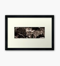 Waterstream in the forest Framed Print