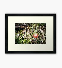 Bright red mushrooms.. tempted Framed Print