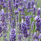 Lavender iphone case by Sue Leonard