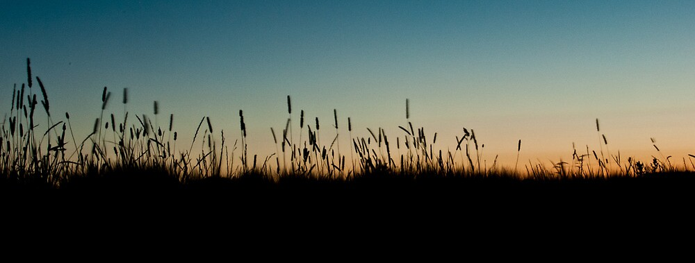 Straws in the sunset by justaphotonoob