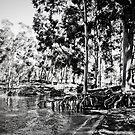 Lake Hume Gum Tree by Jane Keats