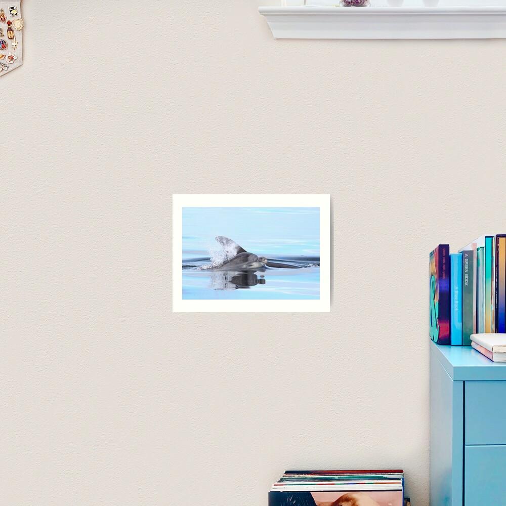 Dolphin calf Art Print