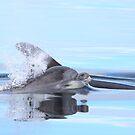 Dolphin calf by Fiona MacNab