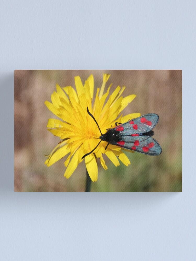 Alternate view of Burnet moth Canvas Print