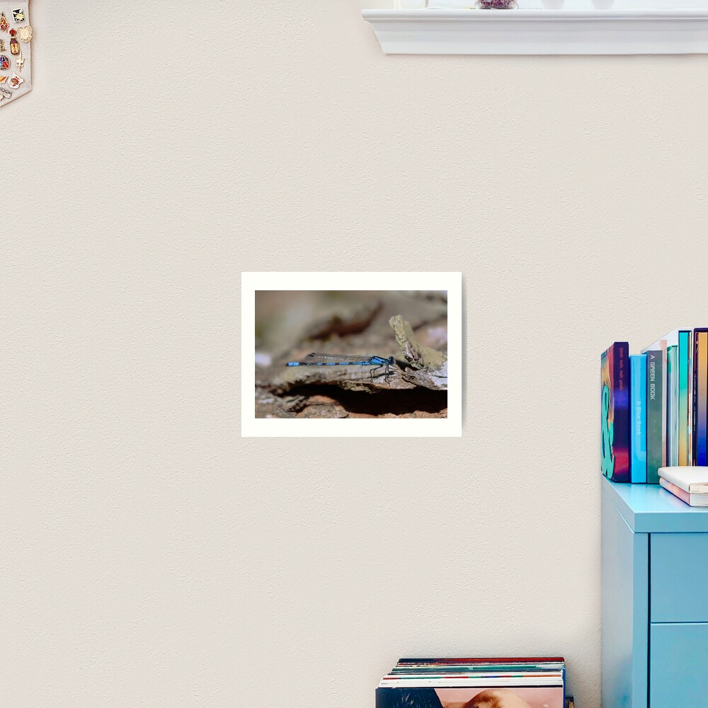 Common blue dragonfly Art Print