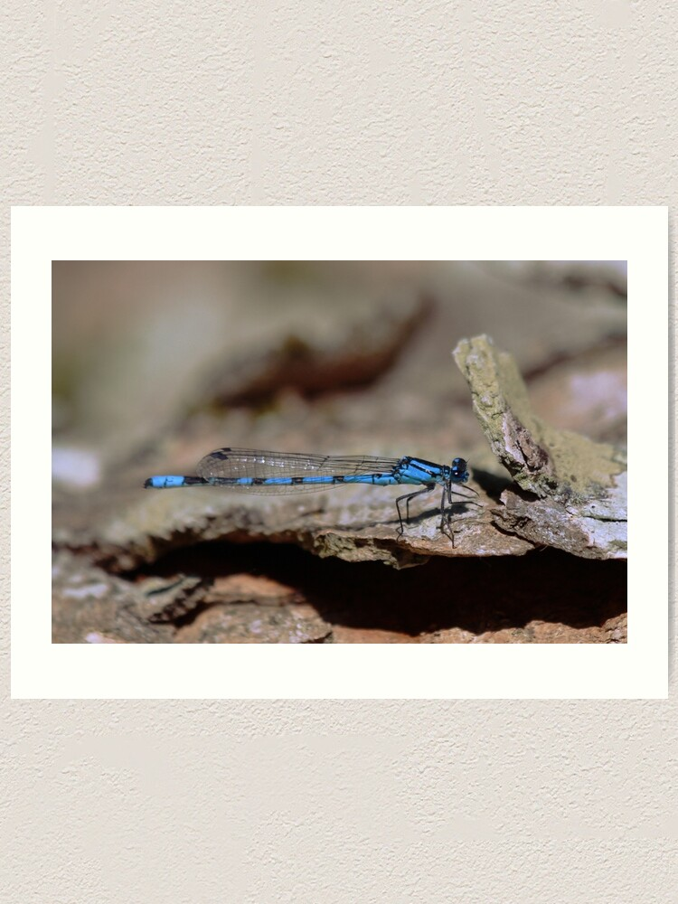 Alternate view of Common blue dragonfly Art Print