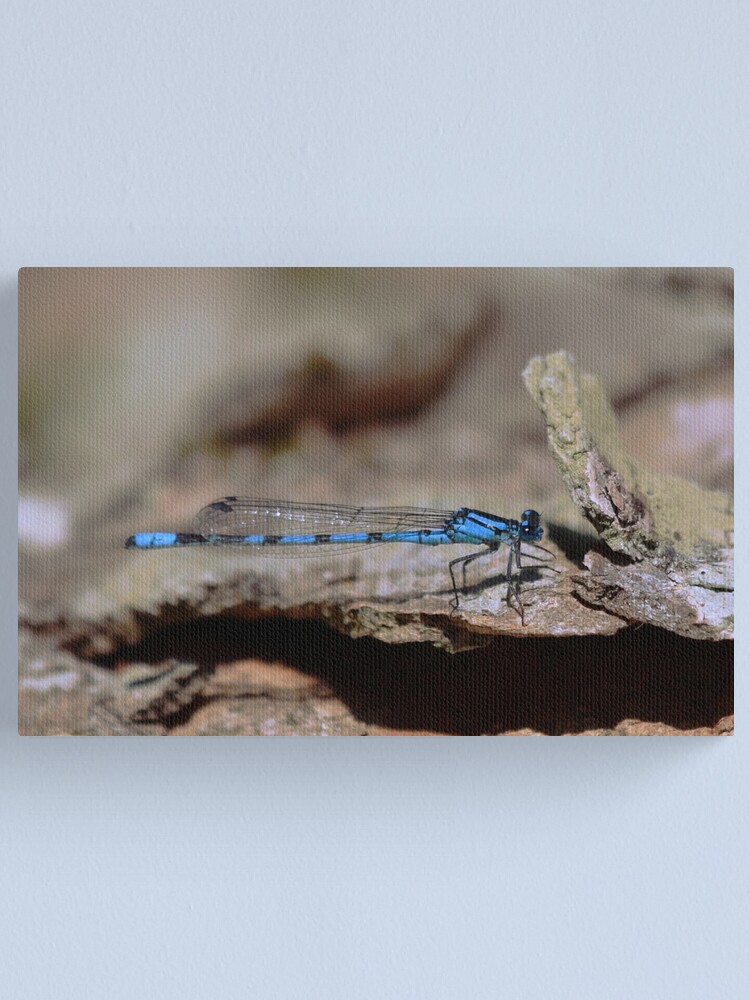 Alternate view of Common blue dragonfly Canvas Print