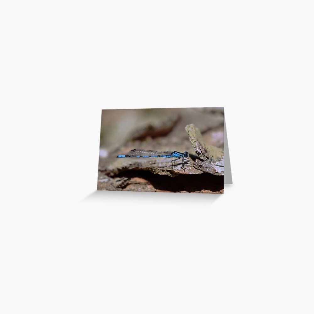 Common blue dragonfly Greeting Card