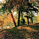 Fall Tree by seanh