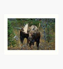 Bull moose in the woods Art Print